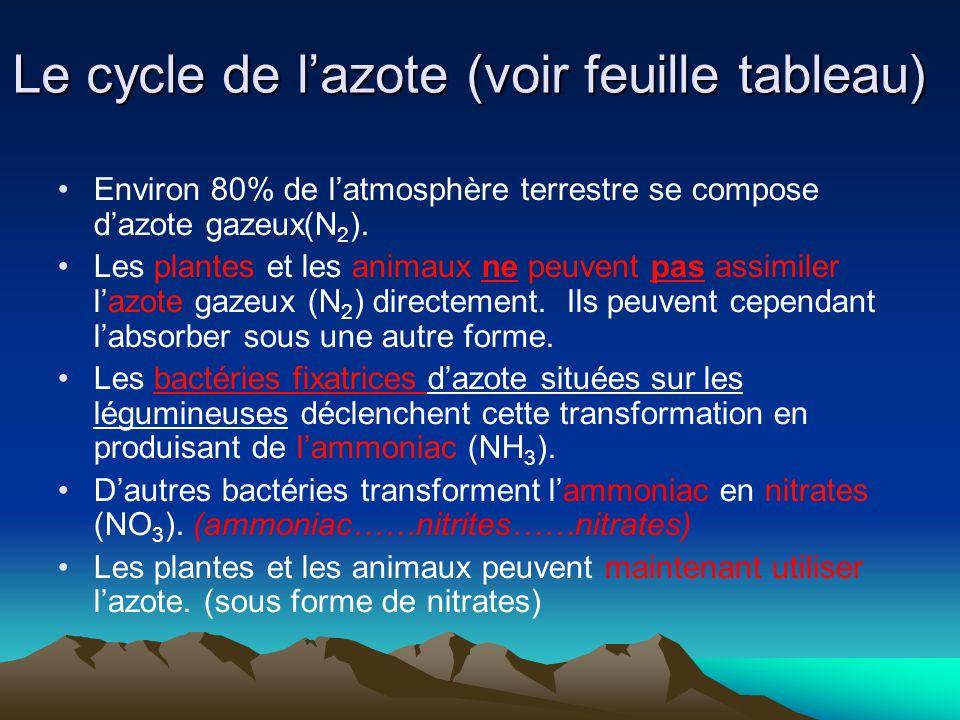Le cycle de lazote (voir feuille tableau) Environ 80% de latmosphère terrestre se compose dazote gazeux(N 2 ). Les plantes et les animaux ne peuvent p