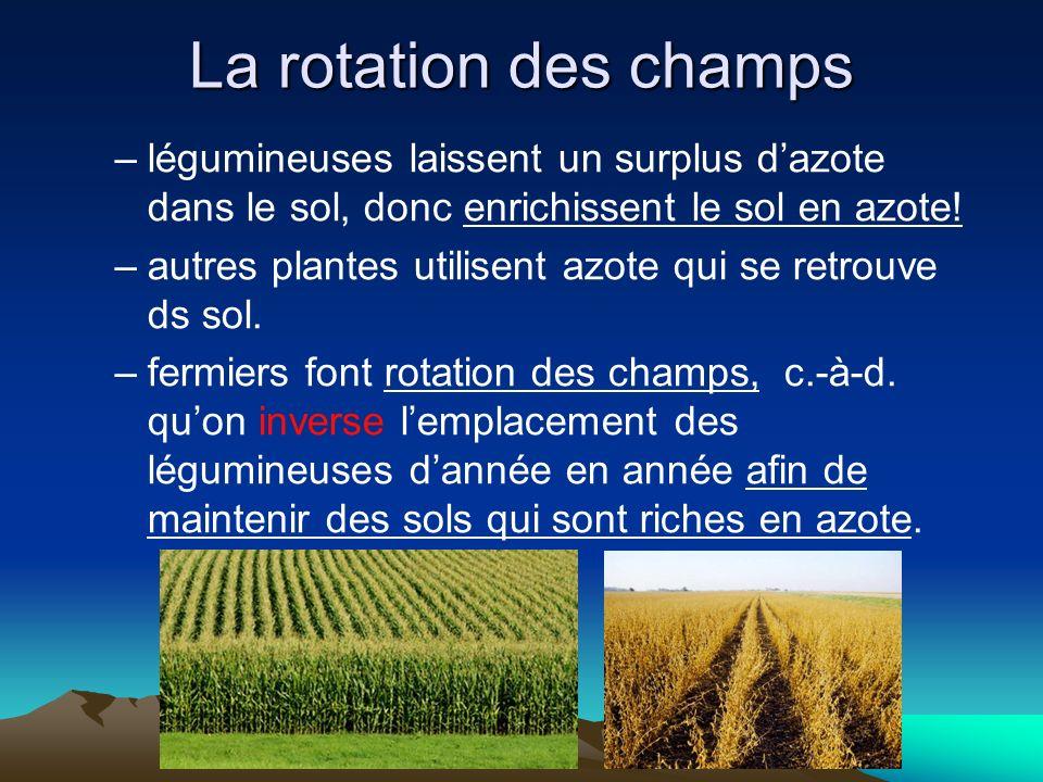 La rotation des champs –légumineuses laissent un surplus dazote dans le sol, donc enrichissent le sol en azote! –autres plantes utilisent azote qui se