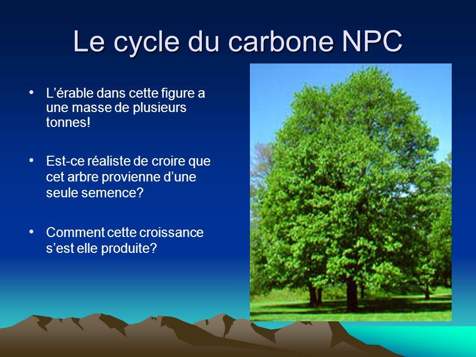 Le cycle du carbone NPC Lérable dans cette figure a une masse de plusieurs tonnes! Est-ce réaliste de croire que cet arbre provienne dune seule semenc