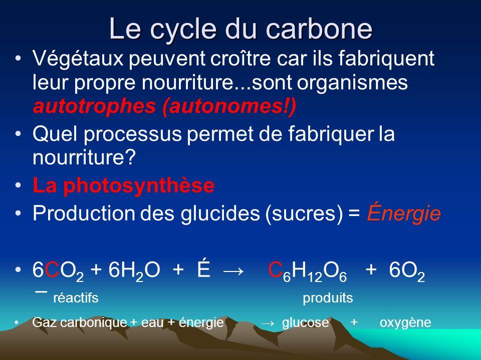 Le cycle du carbone Végétaux peuvent croître car ils fabriquent leur propre nourriture...sont organismes autotrophes (autonomes!) Quel processus perme