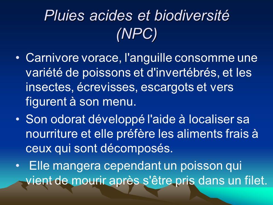 Pluies acides et biodiversité (NPC) Carnivore vorace, l'anguille consomme une variété de poissons et d'invertébrés, et les insectes, écrevisses, escar