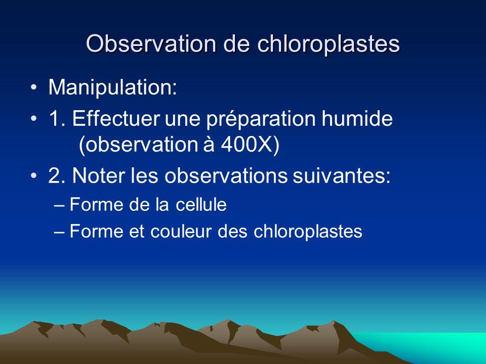 Observation de chloroplastes Manipulation: 1. Effectuer une préparation humide (observation à 400X) 2. Noter les observations suivantes: –Forme de la