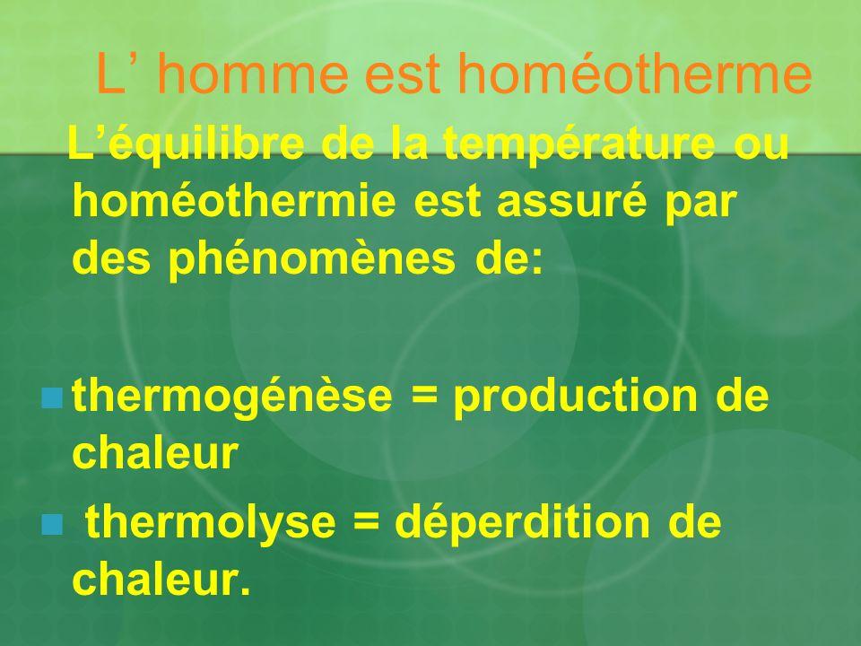 L homme est homéotherme Léquilibre de la température ou homéothermie est assuré par des phénomènes de: thermogénèse = production de chaleur thermolyse