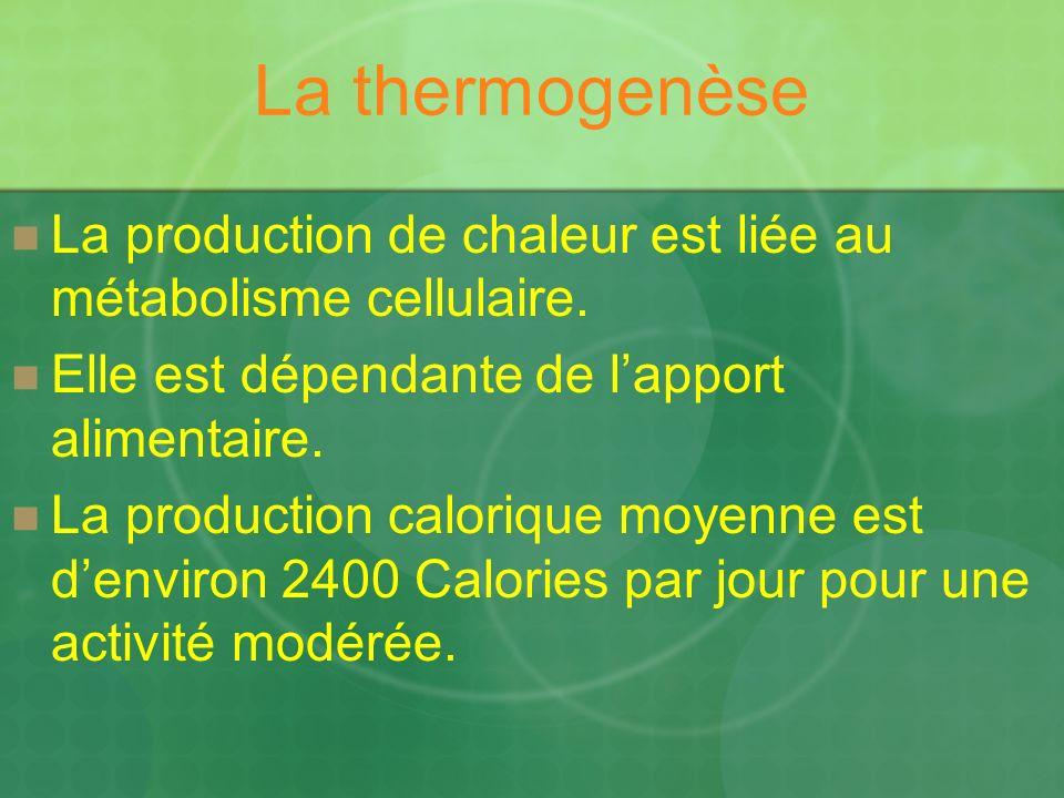 La thermogenèse La production de chaleur est liée au métabolisme cellulaire. Elle est dépendante de lapport alimentaire. La production calorique moyen