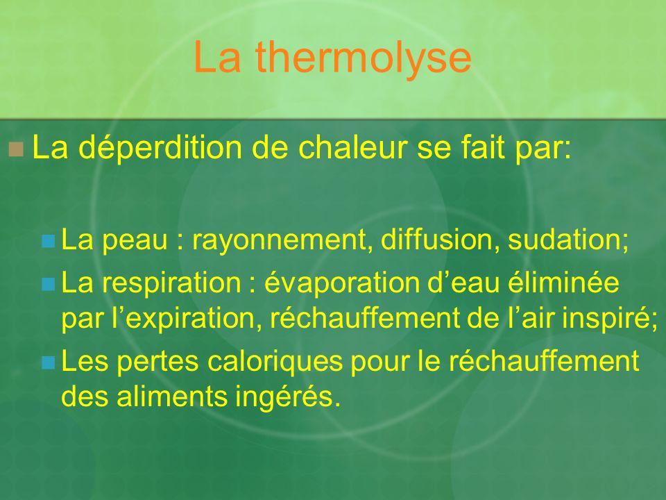 La thermolyse La déperdition de chaleur se fait par: La peau : rayonnement, diffusion, sudation; La respiration : évaporation deau éliminée par lexpiration, réchauffement de lair inspiré; Les pertes caloriques pour le réchauffement des aliments ingérés.