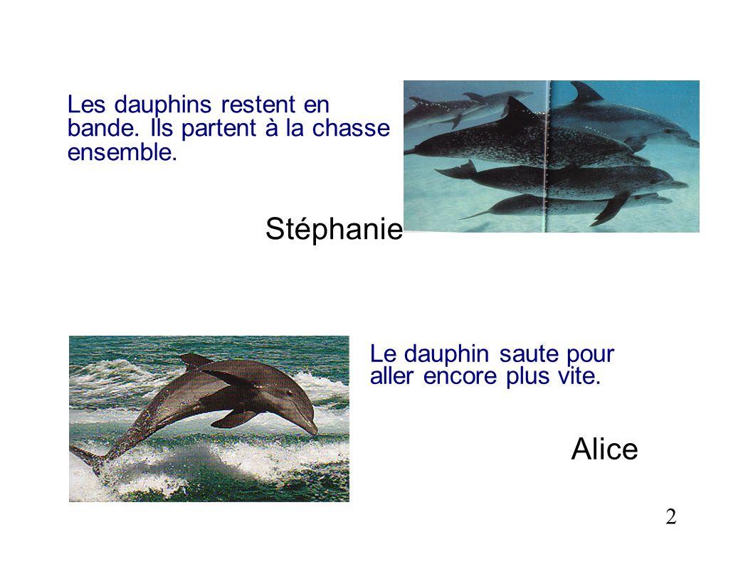 Les dauphins restent en bande. Ils partent à la chasse ensemble. Stéphanie 2 Le dauphin saute pour aller encore plus vite. Alice
