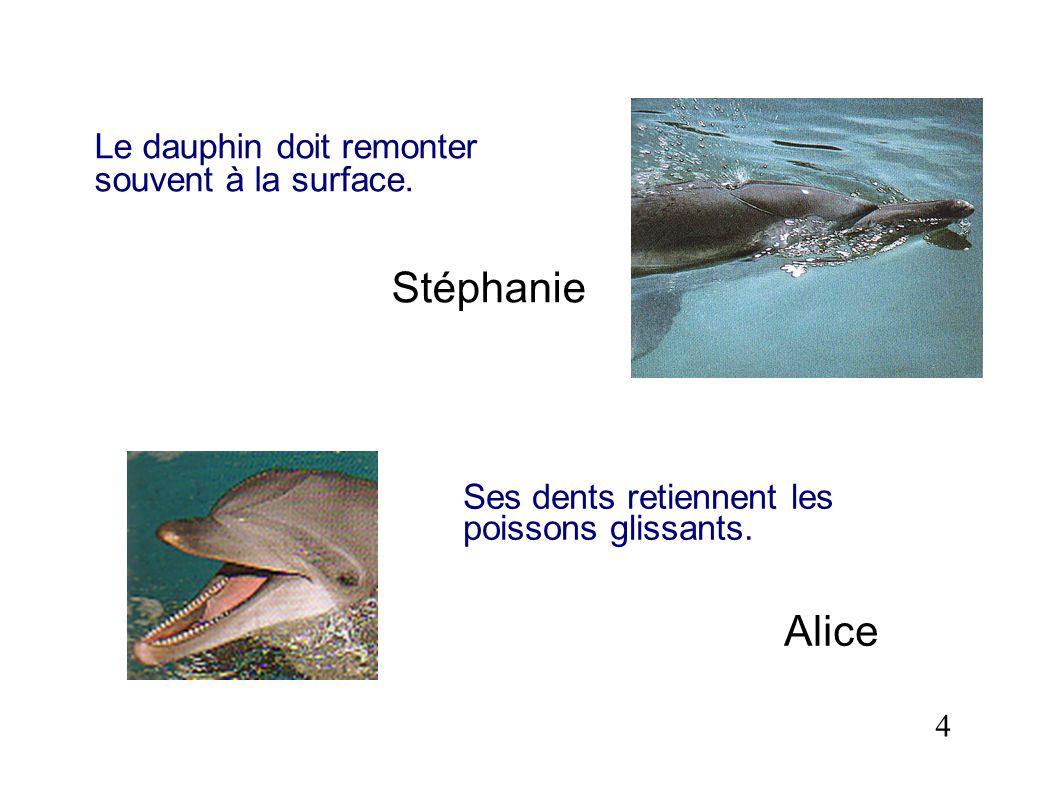 Le dauphin doit remonter souvent à la surface. Stéphanie 4 Ses dents retiennent les poissons glissants. Alice