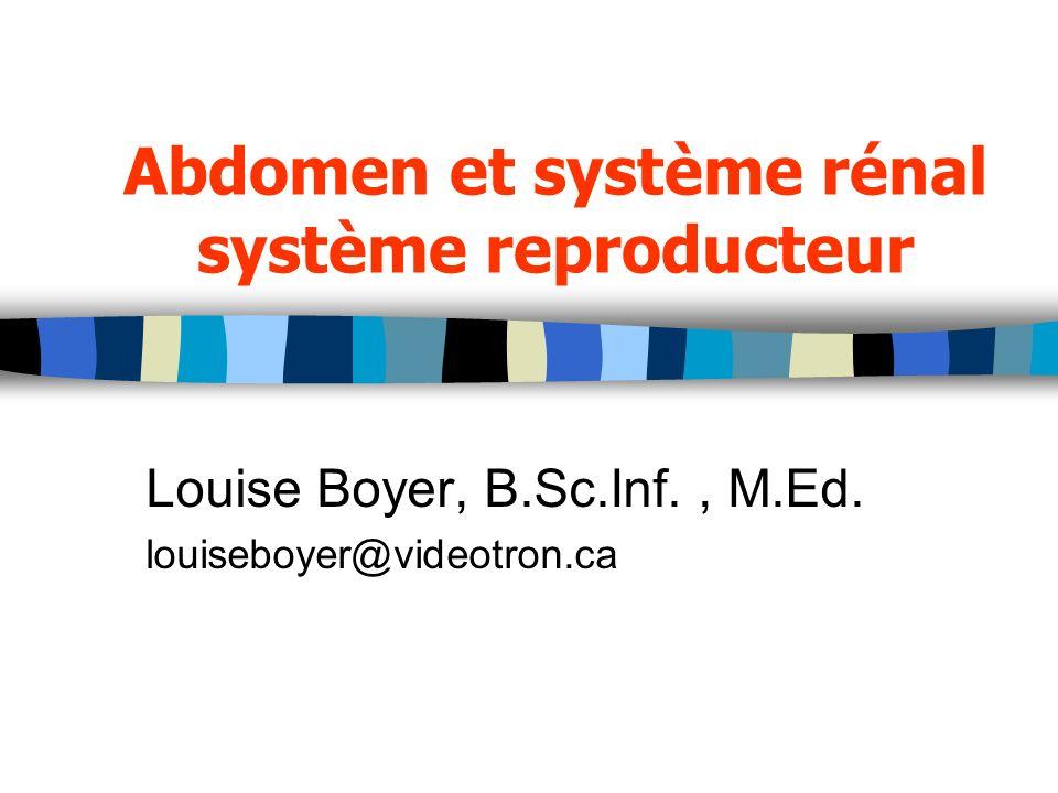 Abdomen et système rénal système reproducteur Louise Boyer, B.Sc.Inf., M.Ed. louiseboyer@videotron.ca