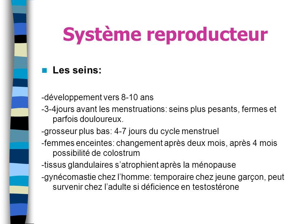 Système reproducteur Les seins: -développement vers 8-10 ans -3-4jours avant les menstruations: seins plus pesants, fermes et parfois douloureux. -gro