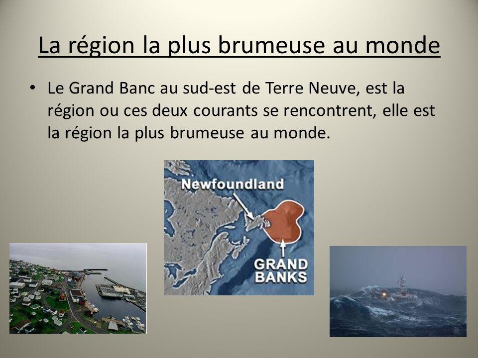 La région la plus brumeuse au monde Le Grand Banc au sud-est de Terre Neuve, est la région ou ces deux courants se rencontrent, elle est la région la