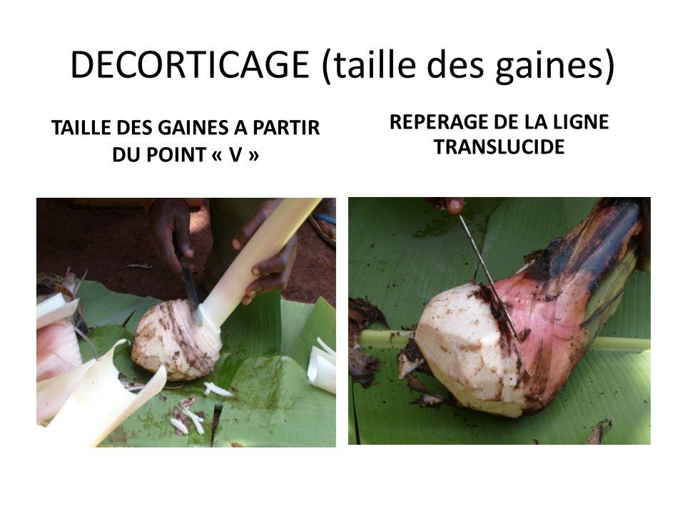 b) le décorticage (La taille des gaines ) Enlever soigneusement toutes les gaines de feuilles en commençant par le bas de la baïonnette. Repérer la ra