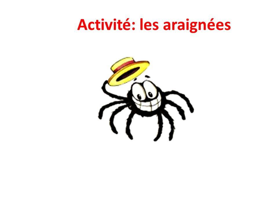 Activité: les araignées