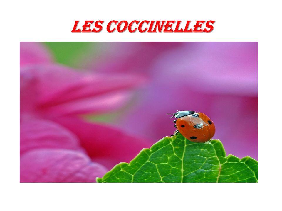 Les COCCINELLES