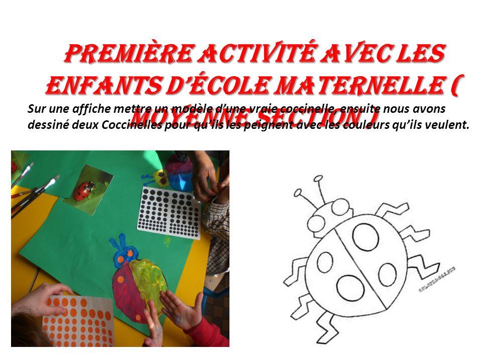 Première activité avec les enfants décole maternelle ( Moyenne section ) Sur une affiche mettre un modèle dune vraie coccinelle, ensuite nous avons de