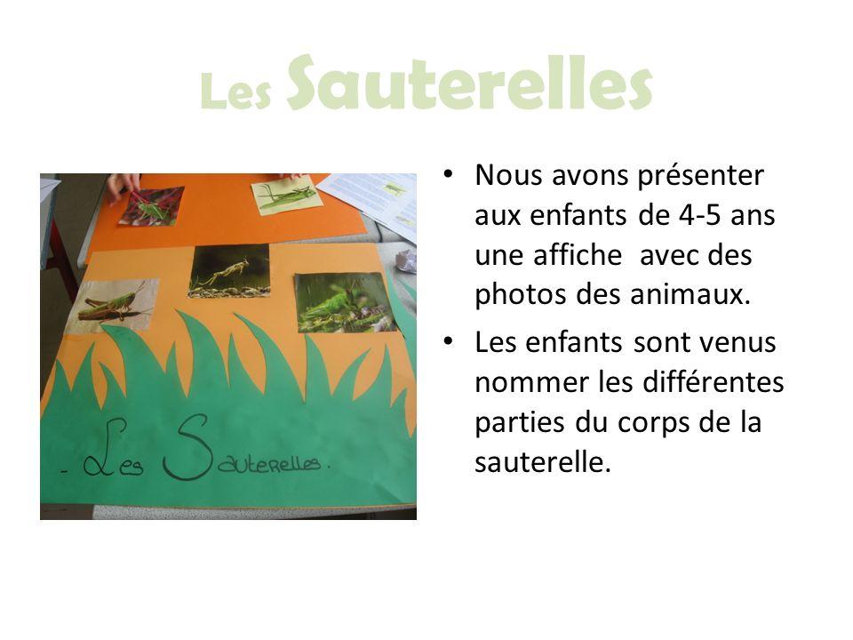 Les Sauterelles Nous avons présenter aux enfants de 4-5 ans une affiche avec des photos des animaux. Les enfants sont venus nommer les différentes par