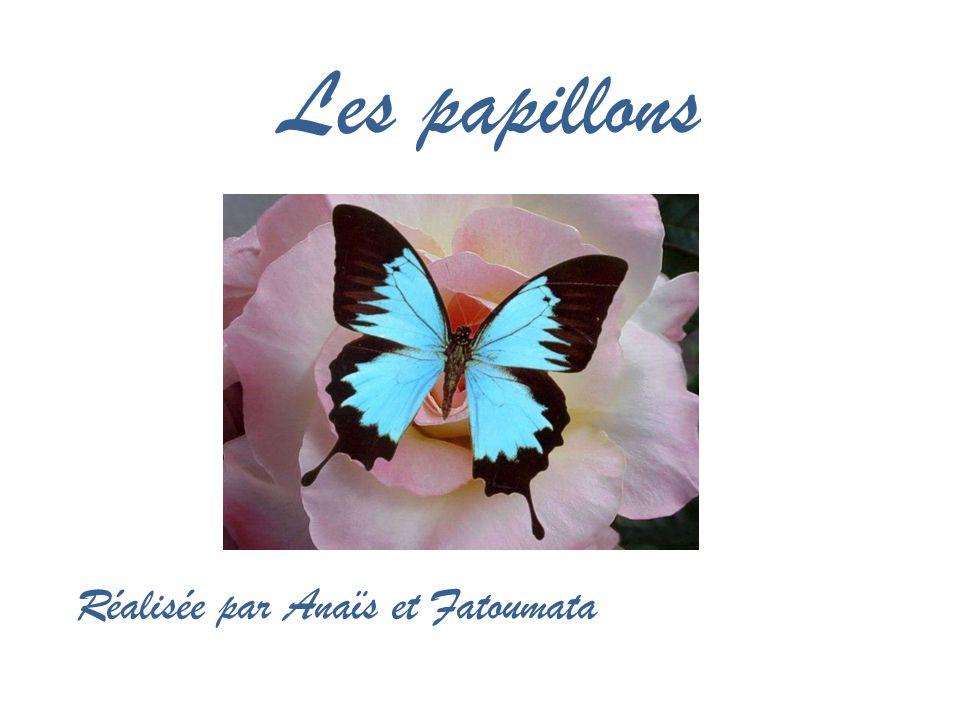 Les papillons Réalisée par Anaïs et Fatoumata