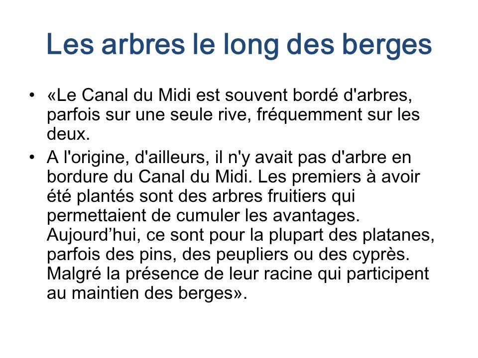 Les arbres le long des berges «Le Canal du Midi est souvent bordé d arbres, parfois sur une seule rive, fréquemment sur les deux.