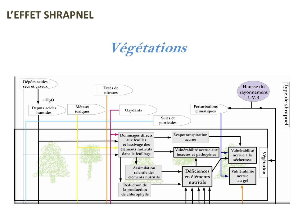 Végétations LEFFET SHRAPNEL
