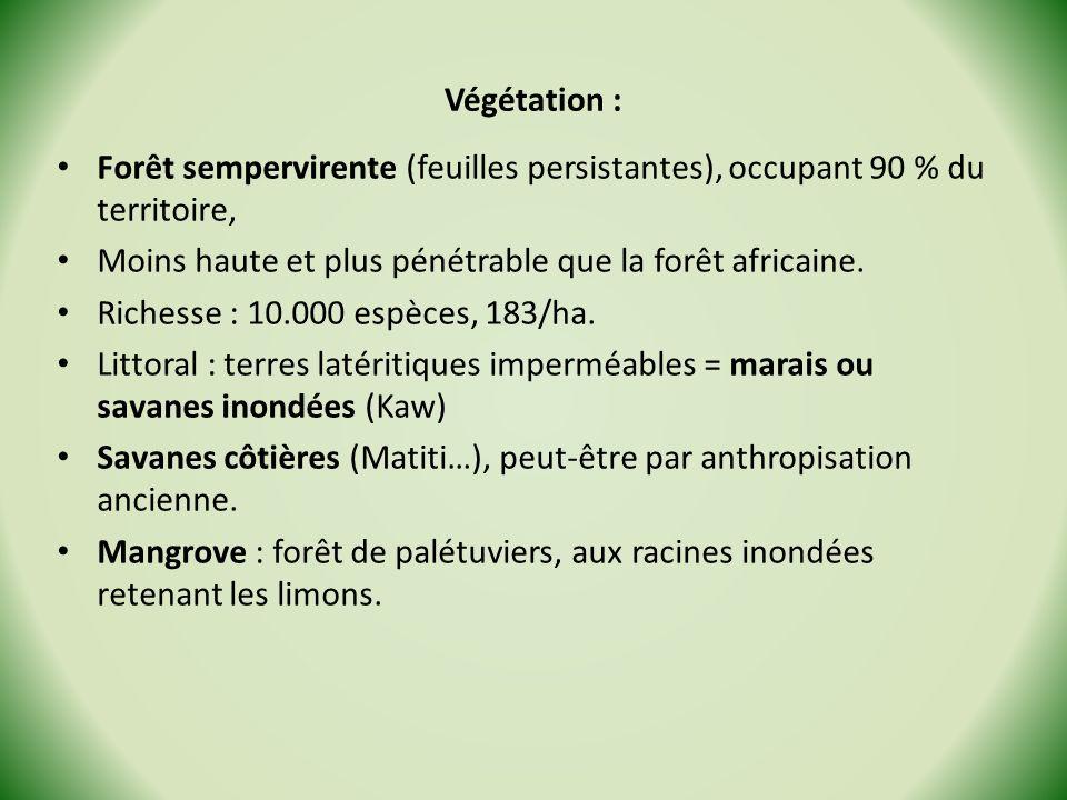 Végétation : Forêt sempervirente (feuilles persistantes), occupant 90 % du territoire, Moins haute et plus pénétrable que la forêt africaine. Richesse