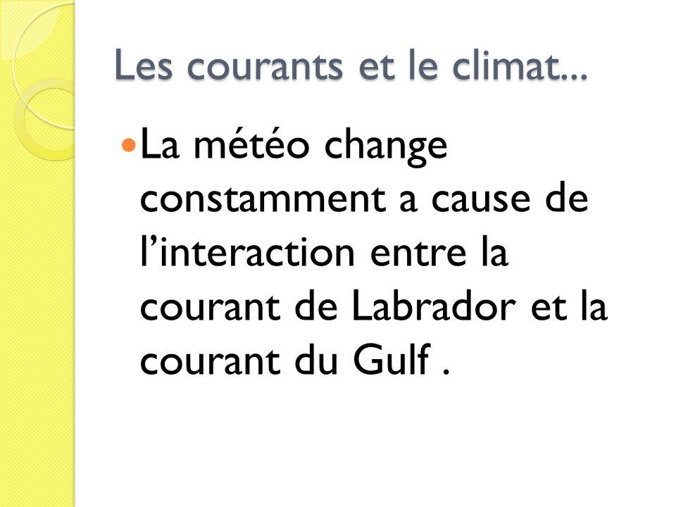 Les courants et le climat... La météo change constamment a cause de linteraction entre la courant de Labrador et la courant du Gulf.
