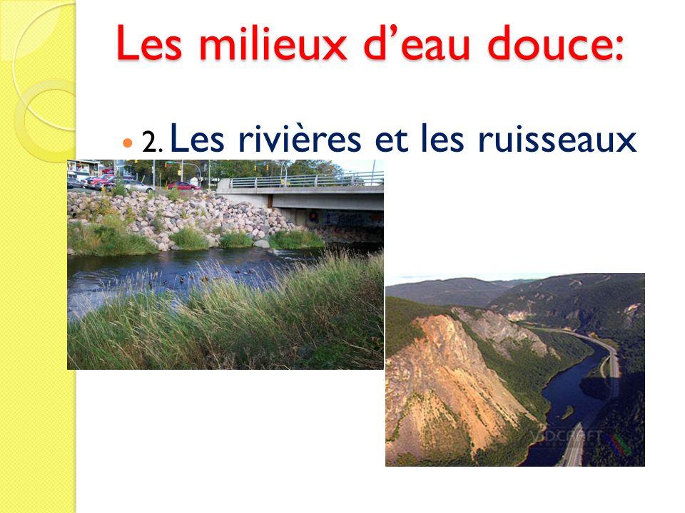 Les milieux deau douce: 2. Les rivières et les ruisseaux