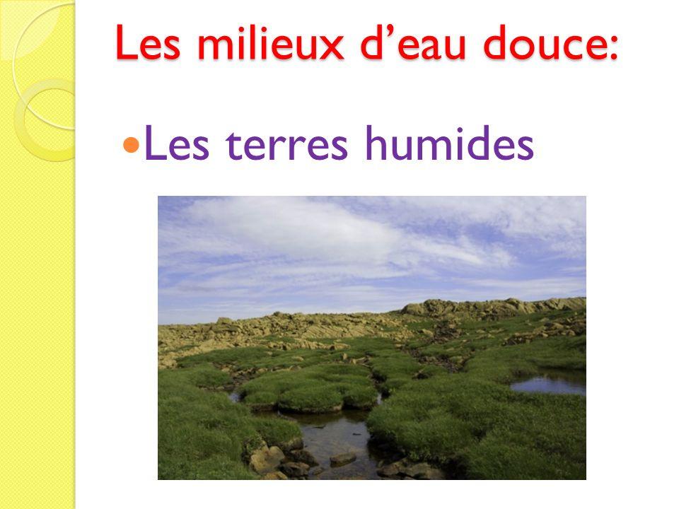 Les milieux deau douce: Les terres humides