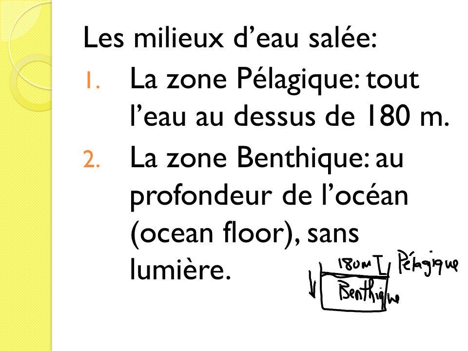 Les milieux deau salée: 1. La zone Pélagique: tout leau au dessus de 180 m. 2. La zone Benthique: au profondeur de locéan (ocean floor), sans lumière.
