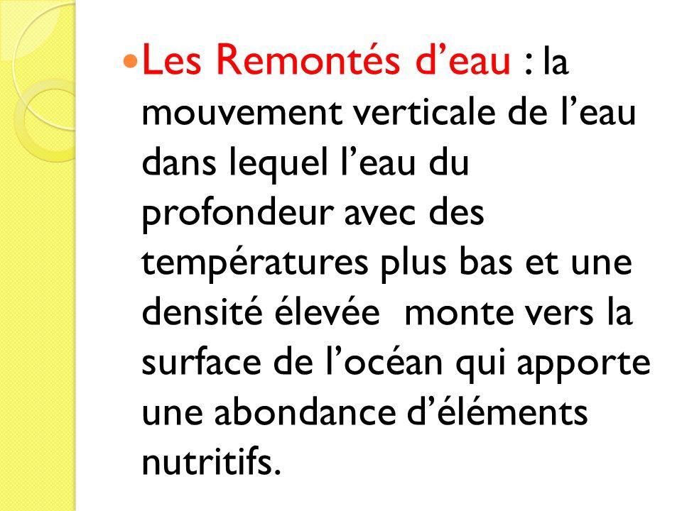 Les Remontés deau : la mouvement verticale de leau dans lequel leau du profondeur avec des températures plus bas et une densité élevée monte vers la s