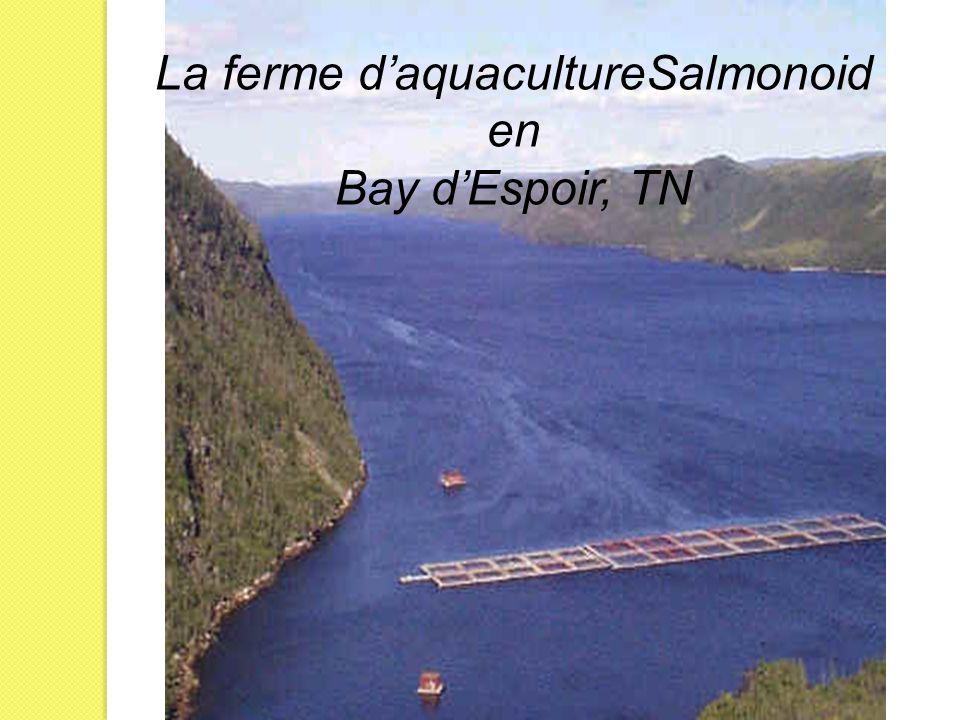 La ferme daquacultureSalmonoid en Bay dEspoir, TN