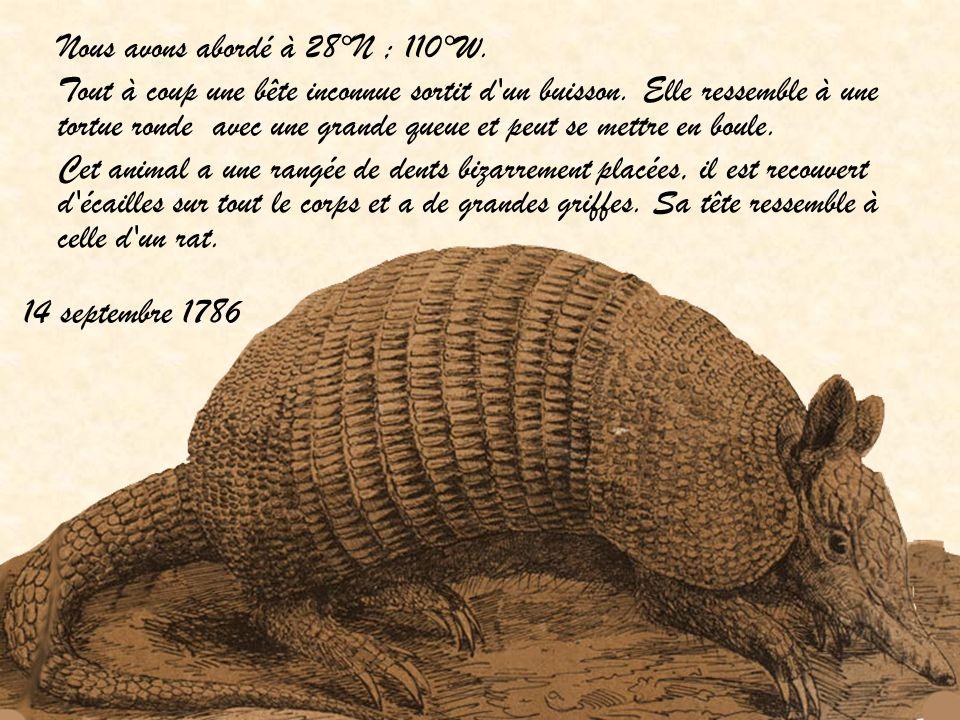 14 septembre 1786 Nous avons abordé à 28°N ; 110°W. Tout à coup une bête inconnue sortit d'un buisson. Elle ressemble à une tortue ronde avec une gran