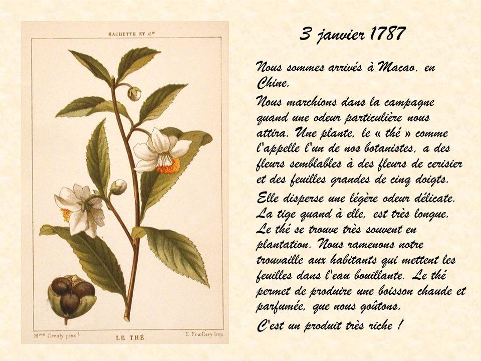 3 janvier 1787 Nous sommes arrivés à Macao, en Chine. Nous marchions dans la campagne quand une odeur particulière nous attira. Une plante, le « thé »