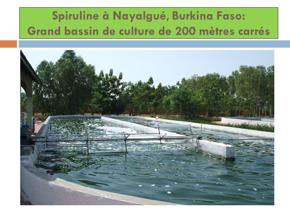 Spiruline à Nayalgué, Burkina Faso: Grand bassin de culture de 200 mètres carrés