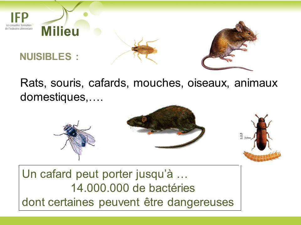 Un cafard peut porter jusquà … 14.000.000 de bactéries dont certaines peuvent être dangereuses NUISIBLES : Rats, souris, cafards, mouches, oiseaux, an