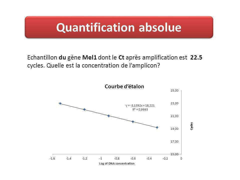 Quantification absolue Echantillon du gène Mel1 dont le Ct après amplification est 22.5 cycles.