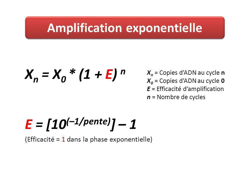 X n = X 0 * (1 + E) n E = [10 (–1/pente) ] – 1 (Efficacité = 1 dans la phase exponentielle) Amplification exponentielle X n = Copies dADN au cycle n X 0 = Copies dADN au cycle 0 E = Efficacité damplification n = Nombre de cycles