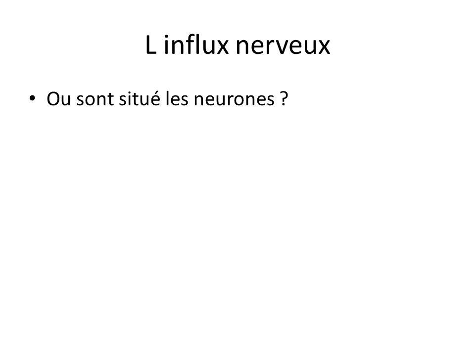 L influx nerveux Ou sont situé les neurones ?