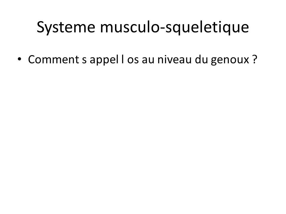 Systeme musculo-squeletique Comment s appel l os au niveau du genoux ?