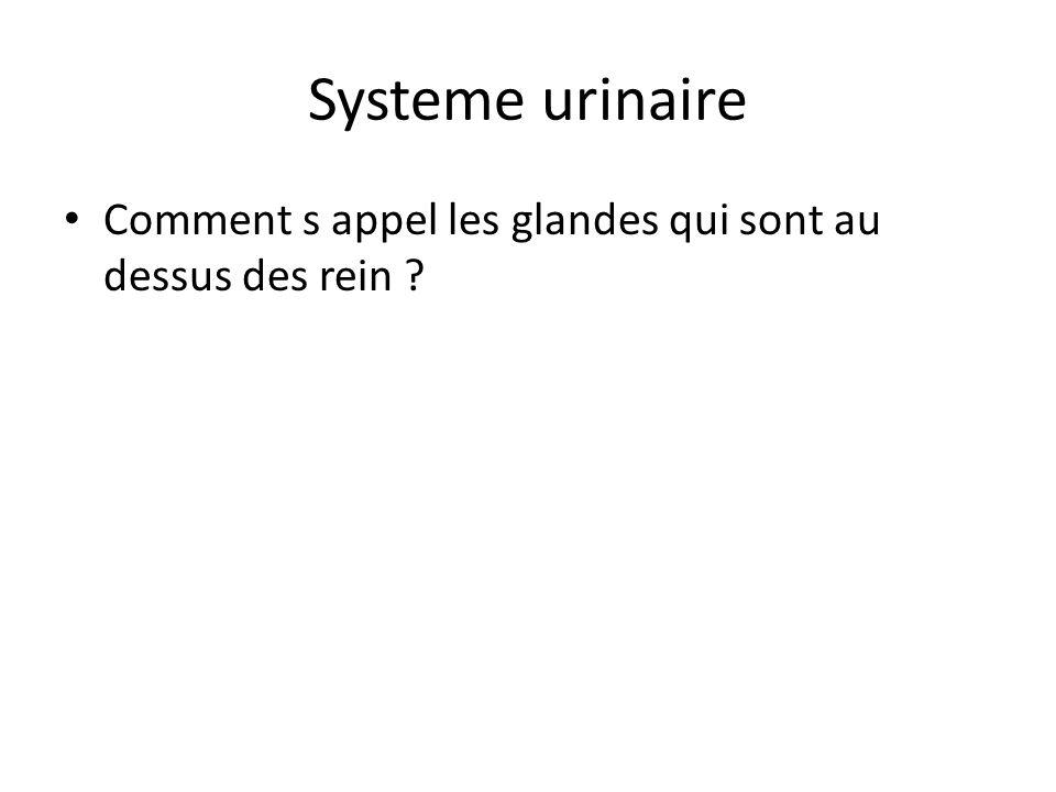 Systeme urinaire Comment s appel les glandes qui sont au dessus des rein ?