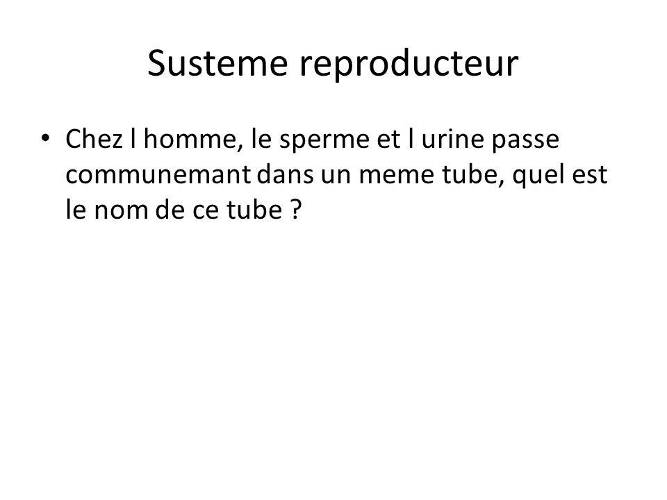 Susteme reproducteur Chez l homme, le sperme et l urine passe communemant dans un meme tube, quel est le nom de ce tube ?
