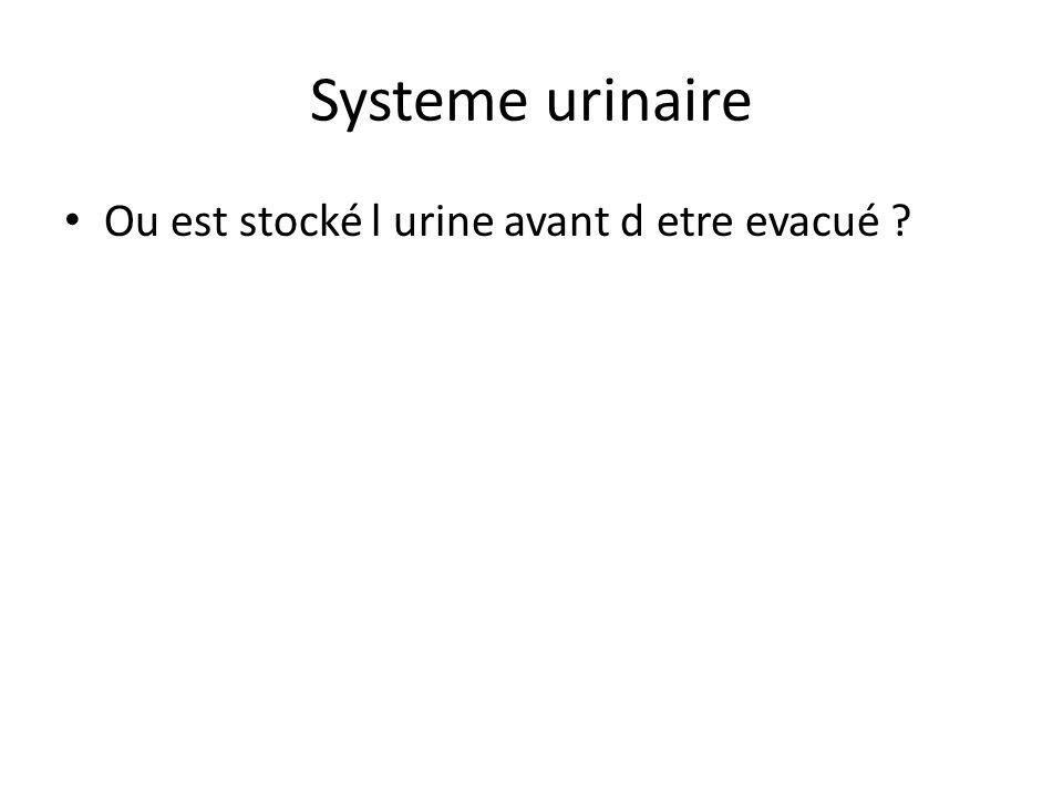Systeme urinaire Ou est stocké l urine avant d etre evacué ?