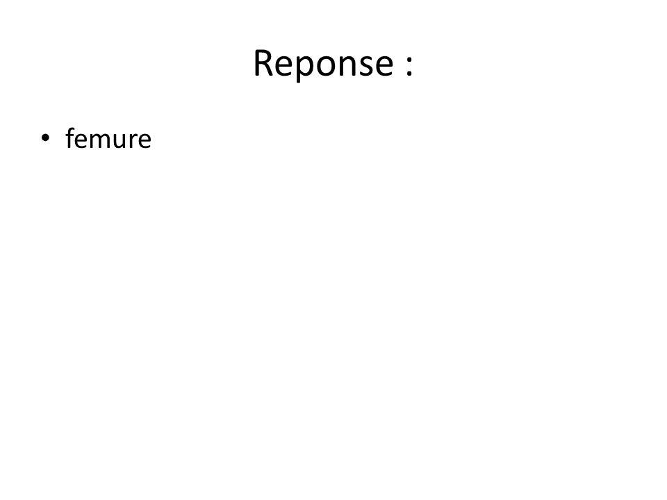 Reponse : femure