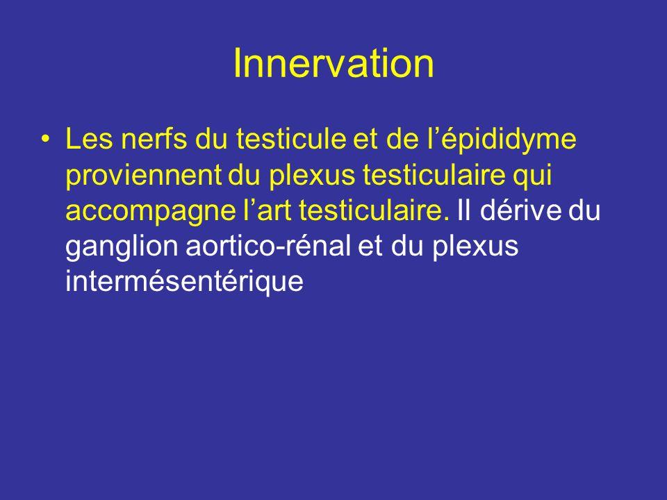 Lymphatiques Chemine dans le cordon spermatique puis dans le canal inguinal pour se terminer essentiellement dans les N lymph lombaux et très accessoi