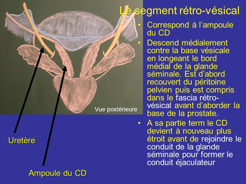 Le segment pelvien En quittant lanneau inguinal profond, le CD chemine dans lespace sous péritonéal pelvien. Durant ce trajet il reste adhérent au pér