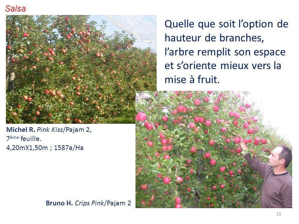 11 Salsa Michel R. Pink Kiss/Pajam 2, 7 ème feuille. 4,20mX1,50m ; 1587a/Ha Bruno H. Crips Pink/Pajam 2 Quelle que soit loption de hauteur de branches
