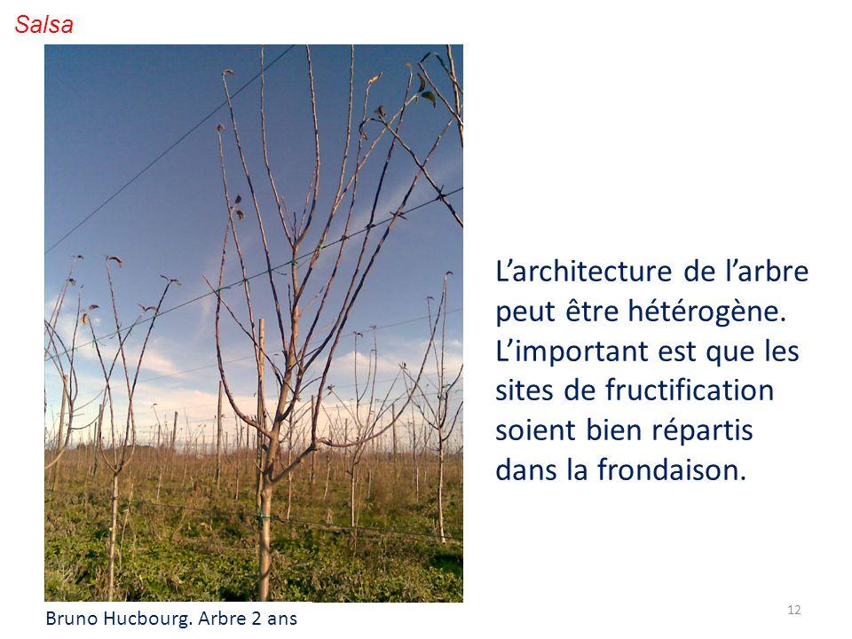 12 Salsa Larchitecture de larbre peut être hétérogène. Limportant est que les sites de fructification soient bien répartis dans la frondaison. Bruno H