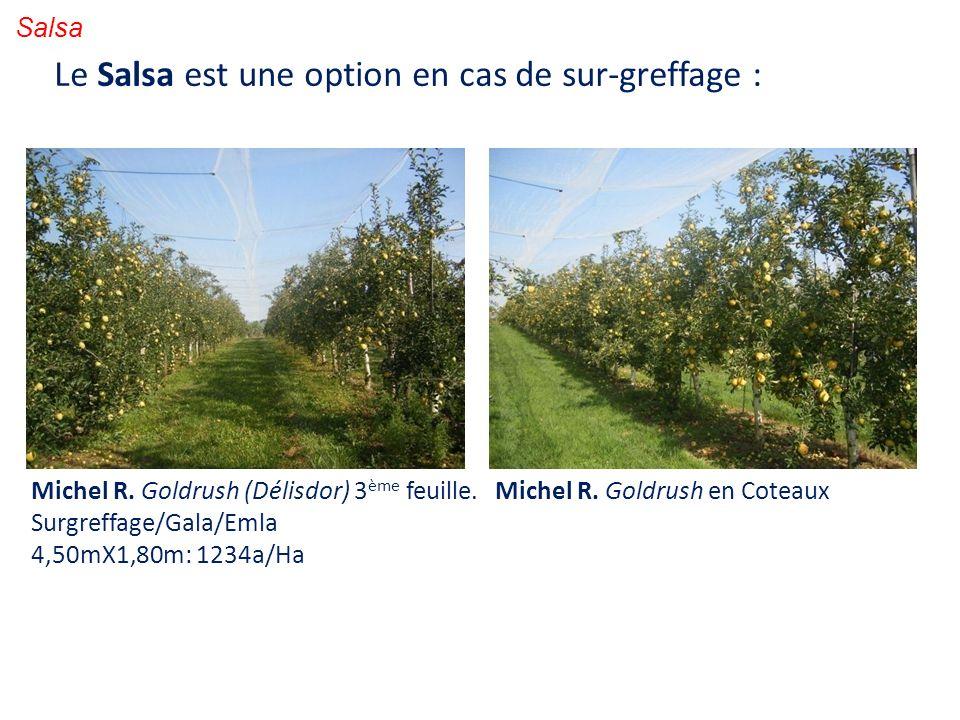 Salsa Le Salsa est une option en cas de sur-greffage : Michel R. Goldrush (Délisdor) 3 ème feuille. Surgreffage/Gala/Emla 4,50mX1,80m: 1234a/Ha Michel