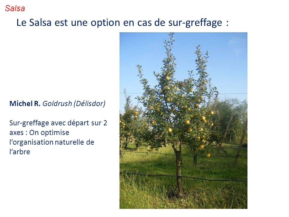 Salsa Le Salsa est une option en cas de sur-greffage : Michel R. Goldrush (Délisdor) Sur-greffage avec départ sur 2 axes : On optimise lorganisation n
