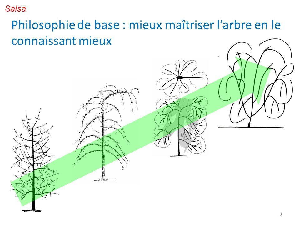 3 Conduite : Structure de larbre : conjugue la basitonie naturelle au niveau du tronc avec lacrotonie au niveau des branches.