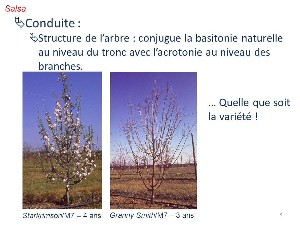 3 Conduite : Structure de larbre : conjugue la basitonie naturelle au niveau du tronc avec lacrotonie au niveau des branches. … Quelle que soit la var