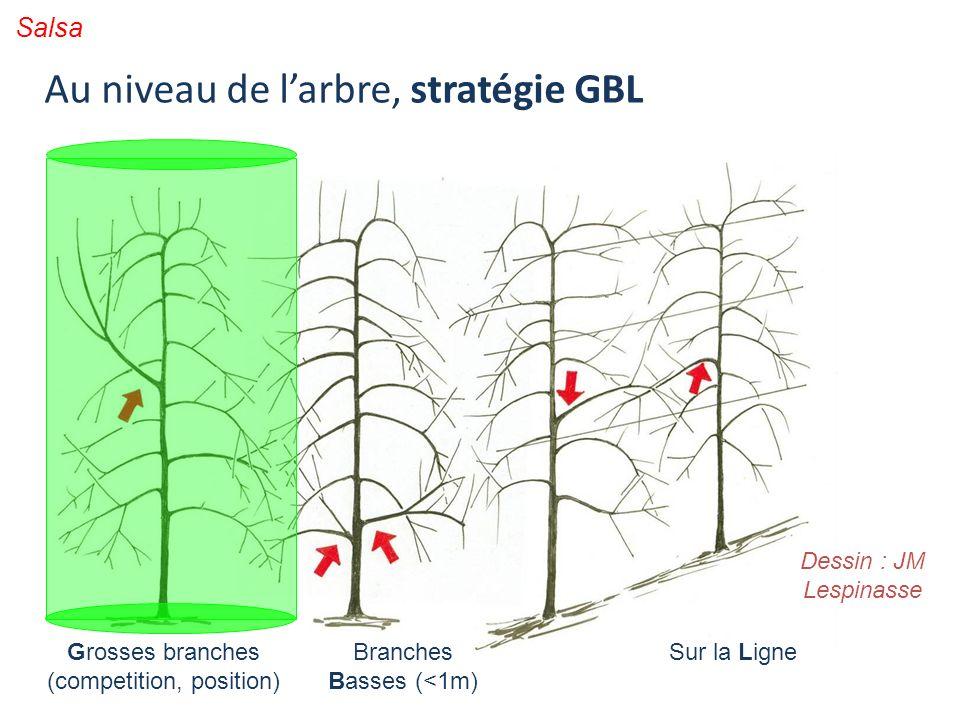 Grosses branches (competition, position) Branches Basses (<1m) Sur la Ligne Dessin : JM Lespinasse Salsa Au niveau de larbre, stratégie GBL